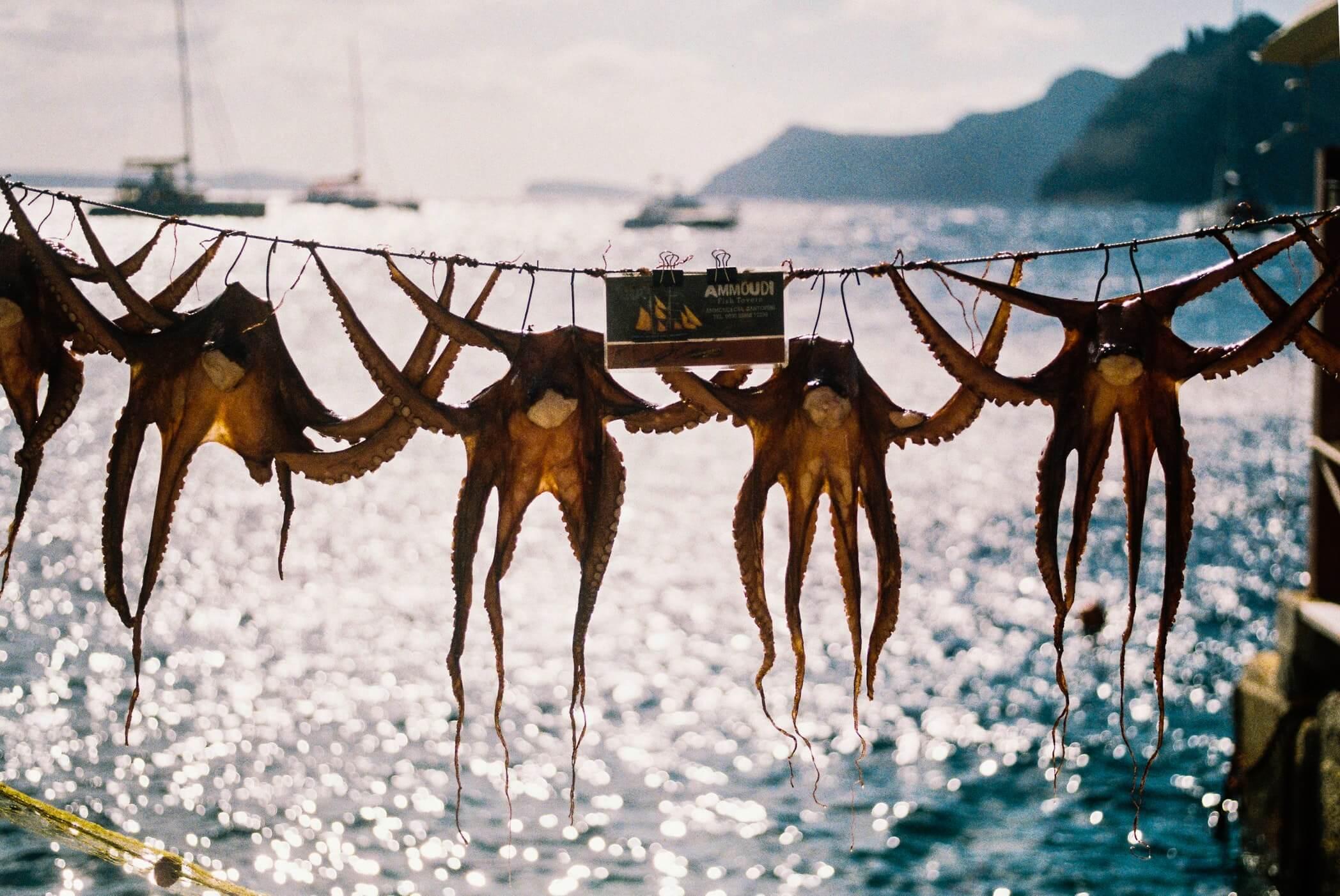 Гурме плаване из Сароническия залив